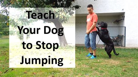 how to stop a dog from jumping on the couch how to train your dog to stop jumping up on people youtube