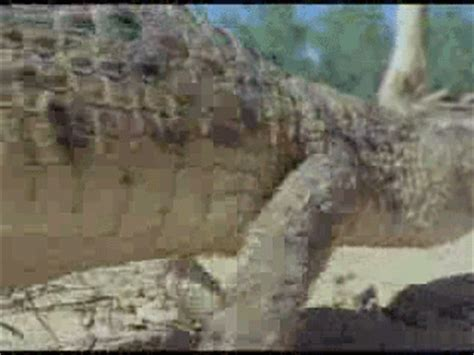 Interior Crocodile Alligator Vine by Aki Gifs Alligator Animated Gifs