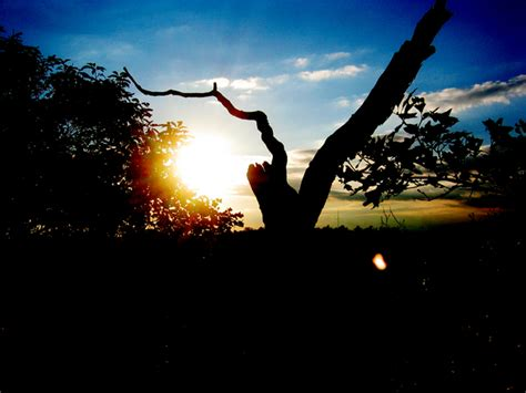 Sunset Bliss sunset bliss photo files 1543830 freeimages