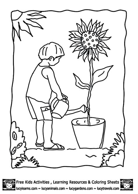 vegetable garden coloring pages coloring home