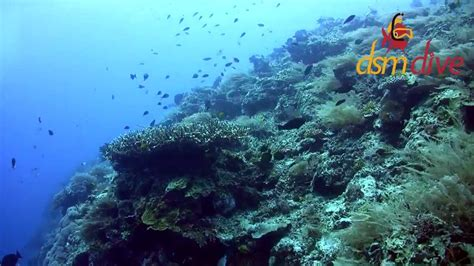 lombok dive dsm dive plong 233 e lombok diving lombok gili meno
