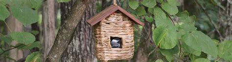 buy bird houses bird roosts and shelters from spring hill
