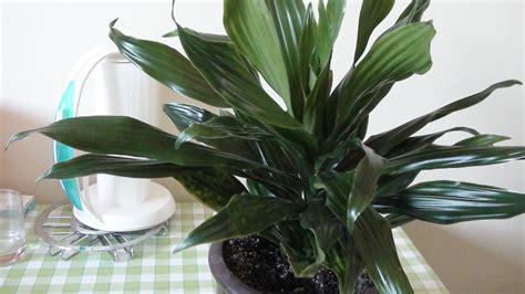 Incroyable Plante Verte D Interieur Photo #1: Plante_verte.JPG