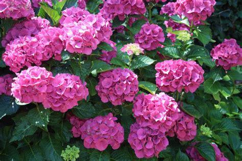 gite et chambres d hotes avec les fleurs du jardin
