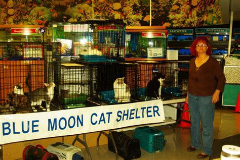 petco adoption the amazing traveling adoption show blue moon cat sanctuary
