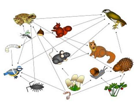 la catena alimentare degli animali catena alimentare un bosco di relazioni