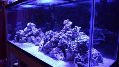 aquascape 220 gallon saltwater aquarium mad hatter