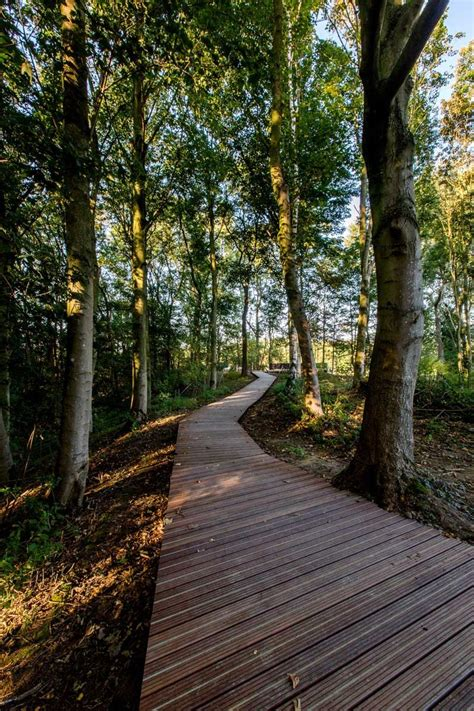 ww landscape memorial forest path ypres belgium omgeving