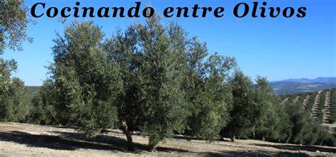 cocinar entre olivos cocinando entre olivos cuisine blogueros de