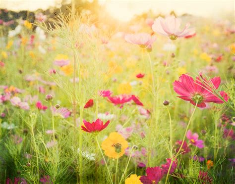 nature photography flower garden photography pink