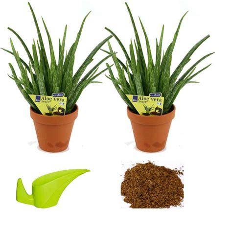 Pflanzen Bestellen 1159 by Kr 228 Uter Pflanzen Kaufen Marokkanische Bio Minze 1a