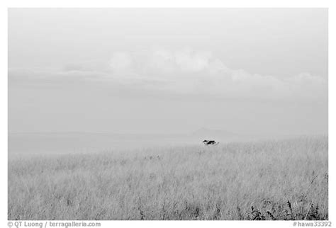 Hawa Acean Colour black and white picture photo grasses and cloud