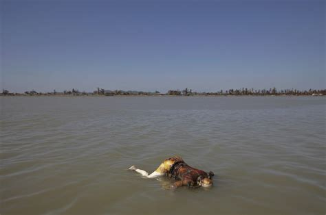the boat was drowned 100 rohingya muslims drown after myanmar refugee boat
