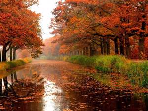 autumn river trees colours leaves nature forests hd wallpaper wallpapers13