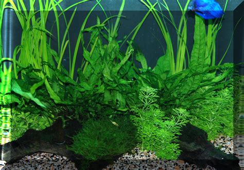 Planted Aquarium Aquascaping by Aquascaping The Planted Aquarium