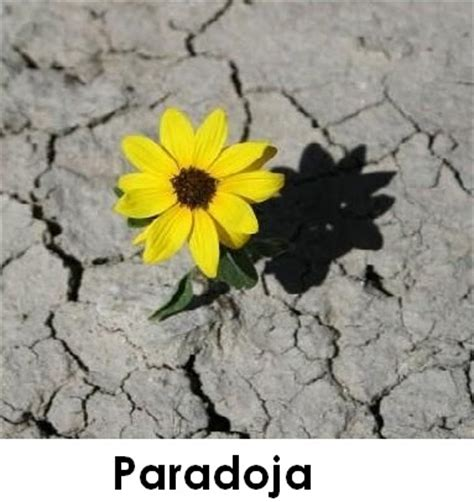 Imagenes Retoricas Paradoja   nticx recursos ret 243 ricos en la publicidad