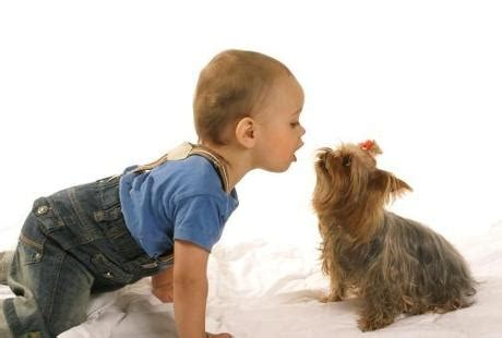 small kid friendly dogs three kid friendly small dogs paperblog