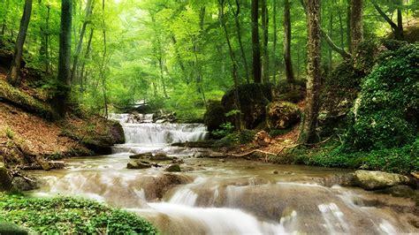garten bäume die 71 besten hintergrundbilder der natur und des