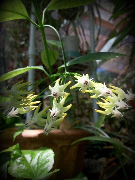 unusual houseplants unusual houseplants to try hgtv