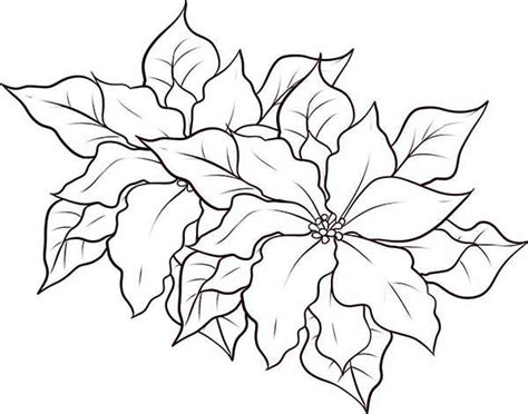 poinsettia leaves coloring pages poinsettia coloring page poinsettia coloring page color
