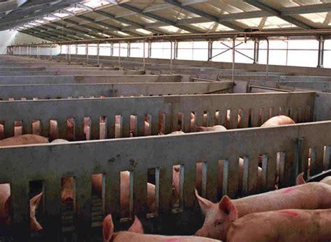 capannoni prefabbricati sardegna stalle per suini