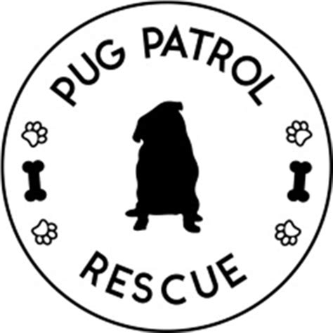 pug rescue nsw pug rescue directory the pug diary