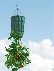 make your own tomato planter