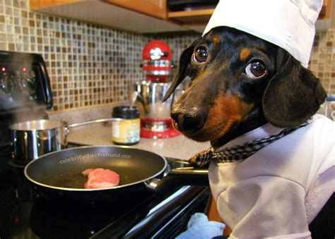 cooking dogs steak sweet potatoes home cooked food recipe crusoe dachshund