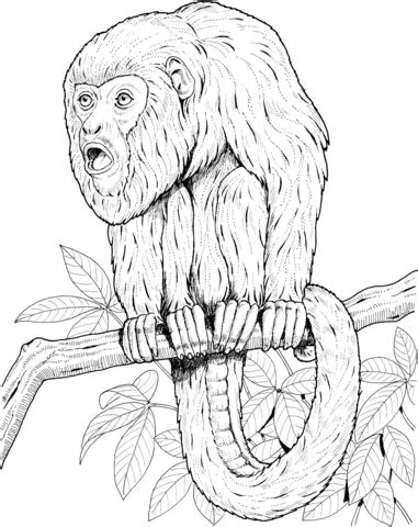 howler monkey coloring page howler monkey coloring coloring pages