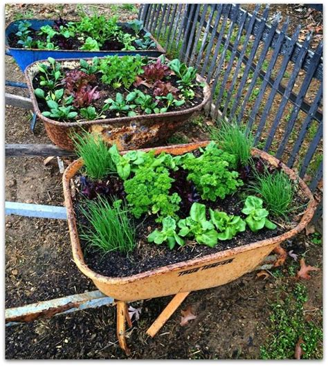 Wheelbarrow Planter by Wheelbarrow Planters Gardening Farm
