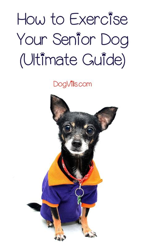 how to exercise a puppy how to exercise a senior ultimate guide dogvills