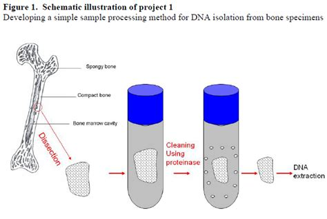 bitconnect vs hextracoin dna isolation diagram gallery how to guide and refrence