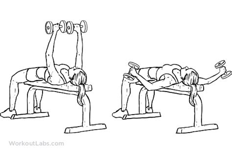 flat dumbell bench press flat bench dumbbell flyes workoutlabs