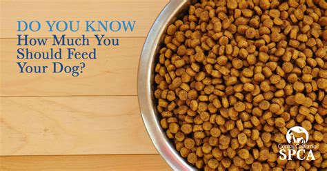how much should you feed a how much should you feed your petfinder pets world