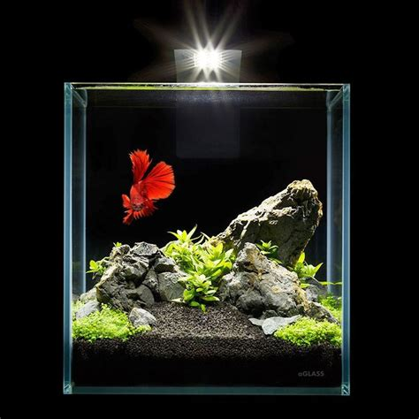 best nano fish tank best 25 nano aquarium ideas on nano tank