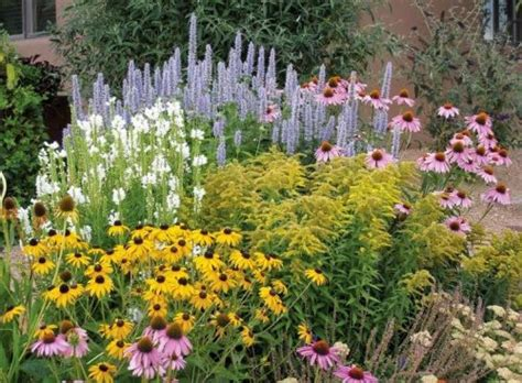 tanaman hias tahan panas urban garden