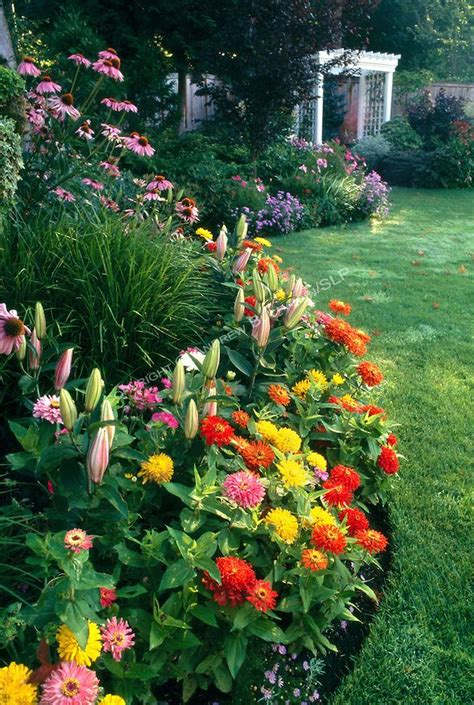 zinnias flower garden best 25 zinnias ideas on zinnia garden
