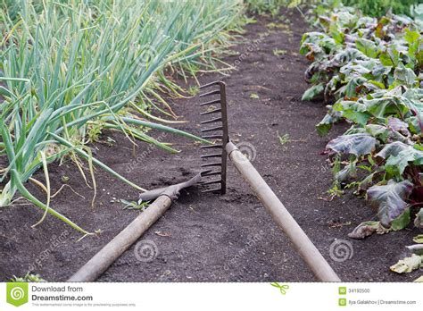 Gardening Tools In The Vegetable Garden Stock Photo Vegetable Gardening Tools