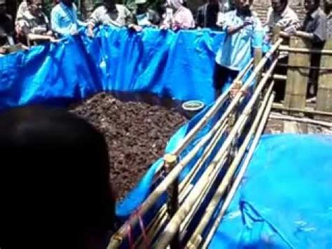 Bibit Lele Sangkuriang Banyuwangi awal pembuatan kolam funnycat tv