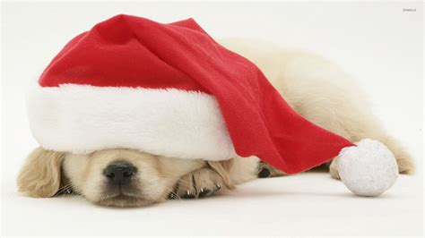 puppy with santa hat puppy sleeping santa s hat wallpaper animal wallpapers 51875