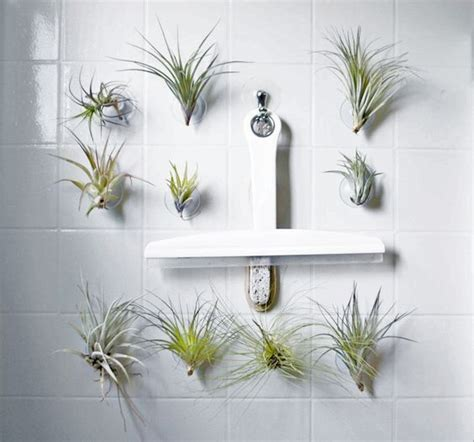 air plants bathroom pinterest the world s catalog of ideas