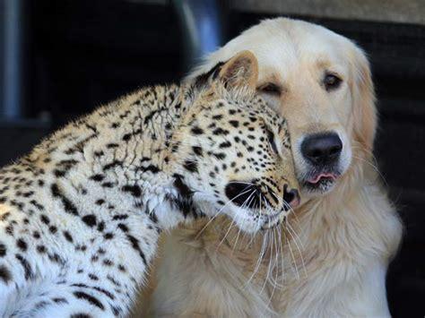 imagenes de amistad incondicional im 225 genes tiernas de amistad incondicional