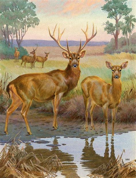 deer wall murals barasingha deer wallpaper wall mural self adhesive sizes magic mu contemporary