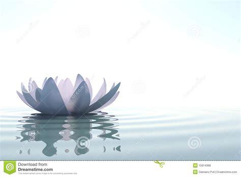 imagenes de fotos zen loto de la flor del zen en agua fotos de archivo libres de