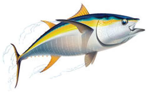 banc de thon banc de thon de truite saumonn 233 e illustration de vecteur