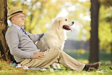 senior home care resume why you should have a pet companion in your golden years