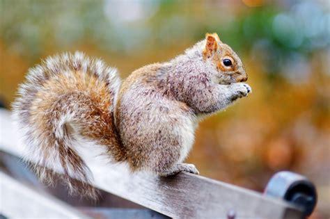 squirrel facts and diversion feeding wild bird blog