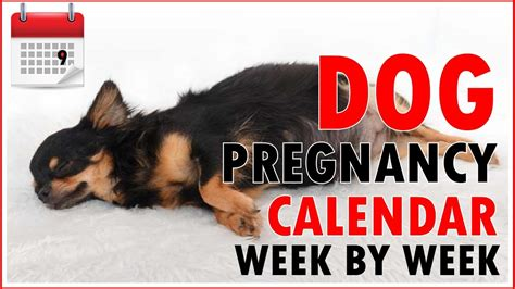 puppies week by week pregnancy calendar week by week don t miss out