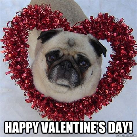 Happy Valentines Meme - happy valentine s day pug valentine quickmeme