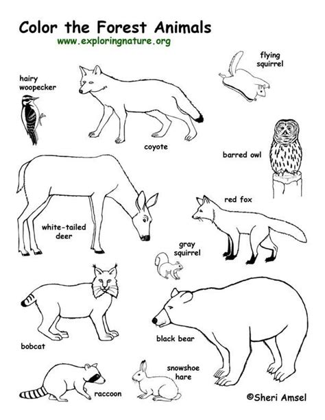 preschool nature coloring pages forest animals coloring page exploring nature